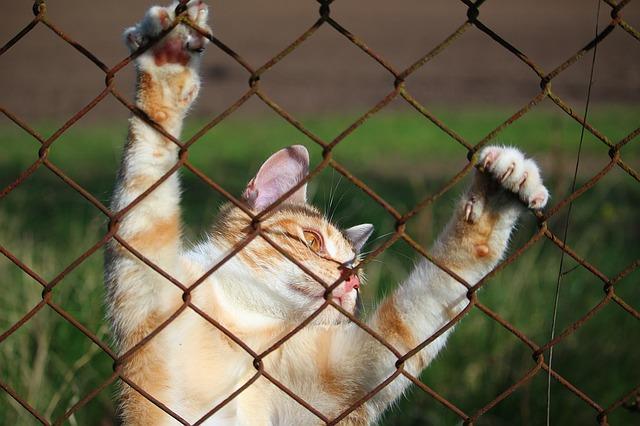 הכל על רויאל קנין לחתולים