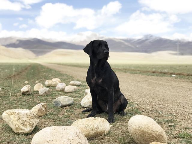 7 שאלות שכל בעל כלב חייב לשאול את הוטרינר שלו